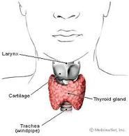 thyroid pic